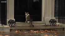 Кіт, коп і двері або дуже британська історія