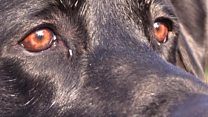 'Hero' dog 'keeps injured woman warm'