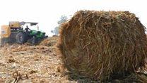 पंजाबमधल्या शेत जाळण्यावर शेतकऱ्यांनी काढलाय पर्यावरणपूरक उपाय