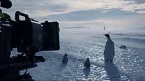 ทีมถ่ายทำสารคดีบีบีซีแหกกฎช่วยชีวิตฝูงเพนกวิน