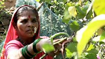 The woman protecting India's indigenous crops