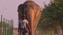 انڈیا میں صحت کے مسائل سے دوچار ہاتھیوں کا ہسپتال