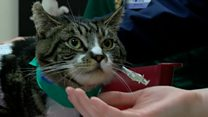 Owner speaks out after cat stabbing