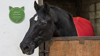 Green plaque for Black Beauty Billy