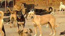 قطط وكلاب للتصدير من مصر