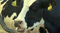 Cow burps, food miles and climate change