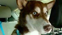 Missing dog's 2000 mile round trip.
