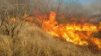 Baby gender reveal sparks US wildfire
