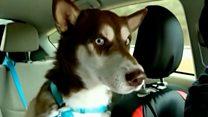 Пропавший в Нью-Йорке пес вернулся домой. Его нашли во Флориде