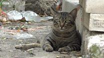Bangkok: Nơi mèo hoang béo hơn mèo nhà