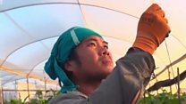বিবিসির তদন্ত: ইসরায়েলে নিপীড়নের শিকার যেসব থাই নাগরিক