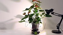 Cyber-plant drives itself towards light