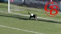 Бродячая собака поучаствовала в футбольном матче.