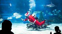 Scuba diving Santa swims with mermaid