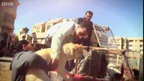 বেওয়ারিশ কুকুর বিড়াল রপ্তানির পরিকল্পনায় মিশরে ক্ষোভ