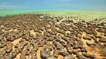 Did microbes build stromatolites on Mars?