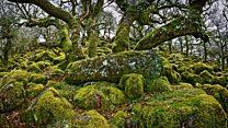 چگونگی جذب دیاکسید کربن در گیاهان