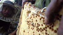 Meet the daredevil honey hunters