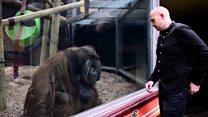 Magician's tribute to zoo's orangutan