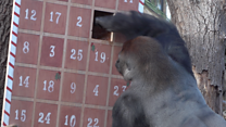 What zoo animals are up to this Christmas