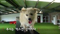 중국 스타 강아지의 유전자를 편집하다