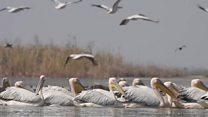કેમ સુકાઈ રહ્યું છે યાયાવર પક્ષીઓનું આ શ્રેષ્ઠ સ્થાન નળ સરોવર?