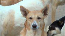 ทำไมแผนการส่งออกสุนัขและแมวจรจัดของอียิปต์ทำให้คนไม่พอใจ รวมถึง โม ซาลาห์?