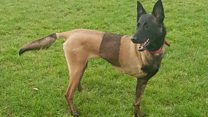 Three-legged police dog finds new home