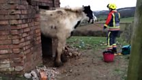 New Year's 'Eve' horse rescued