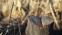 نگرانی از تخریب جنگلهای ارسباران