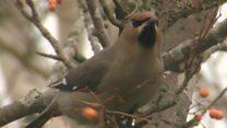 Winter bird visitors thrill photographers