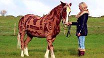 آرایشگر اسبها