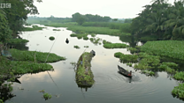 """""""المزارع العائمة"""" تساعد الناس على التعايش مع الفيضانات في بنغلاديش"""