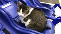 Online fame for Molly the Tesco cat