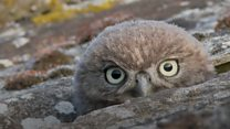 Little owls win photographer's heart