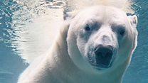 El fotógrafo que viaja por el mundo haciendo retratos de animales en peligro de extinción