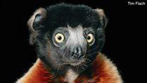 صور بورتريه رائعة لحيوانات مهددة بالانقراض