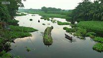 بقای کشاورزی با 'مزارع شناور' در بنگلادش