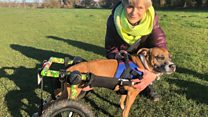 Wheelie Winston a doggy help hero