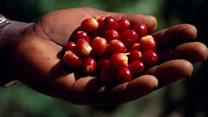 Is your coffee facing extinction?