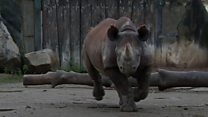 How do you move a rhino to the UK?