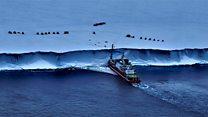 Expedition investigates Larsen Ice Shelf