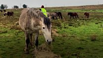 Volunteers feeding up to 200 horses a day