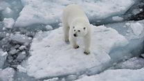 گزارش نگران کننده محققان نروژی از تغییر اقلیم
