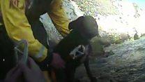 Dog unhurt after 100ft fall