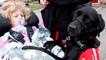 Dog helps disabled toddler get dressed