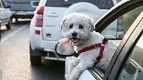 ممنوعیت سگ گردانی در تهران؛ دوستی وفادار یا دشمنی خطرناک؟