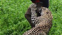 Wild leopard attacks Indian village