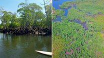 4تك من مدغشقر: ما هو دور أشجار المنغروف في التخفيف من التغير المناخي؟