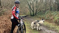 The sport which combines dogs and cycling